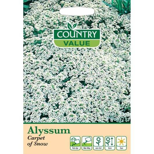 Alyssum Carpet of Snow CV MF Seeds