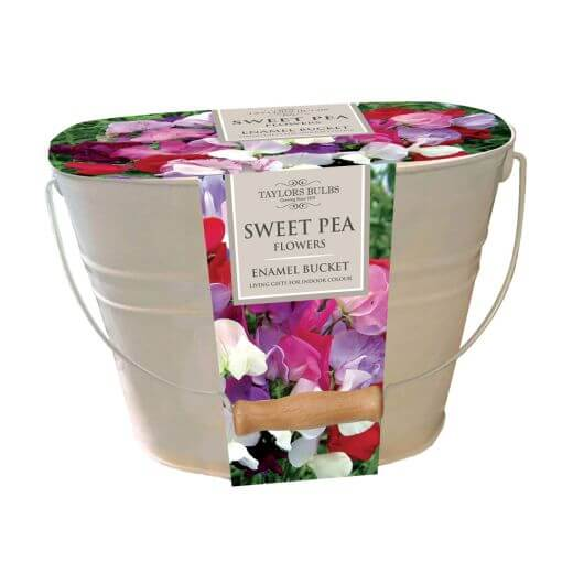 Taylors Bulbs - Sweet Pea Oval Enamel Pail Set