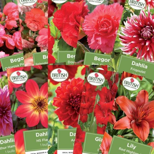 Pinks & Reds 10 Pack Bulb Collection