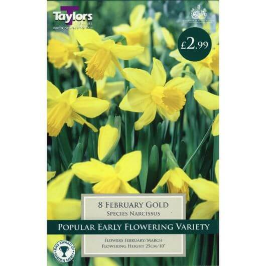 Taylors Narcissi February Gold