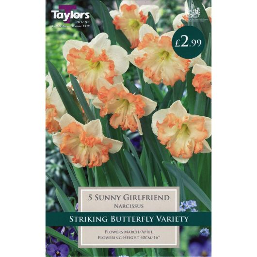 Taylors Narcissi Sunny Girlfriend