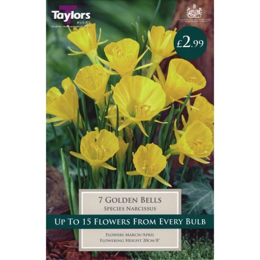 Taylors Narcissi Golden Bells