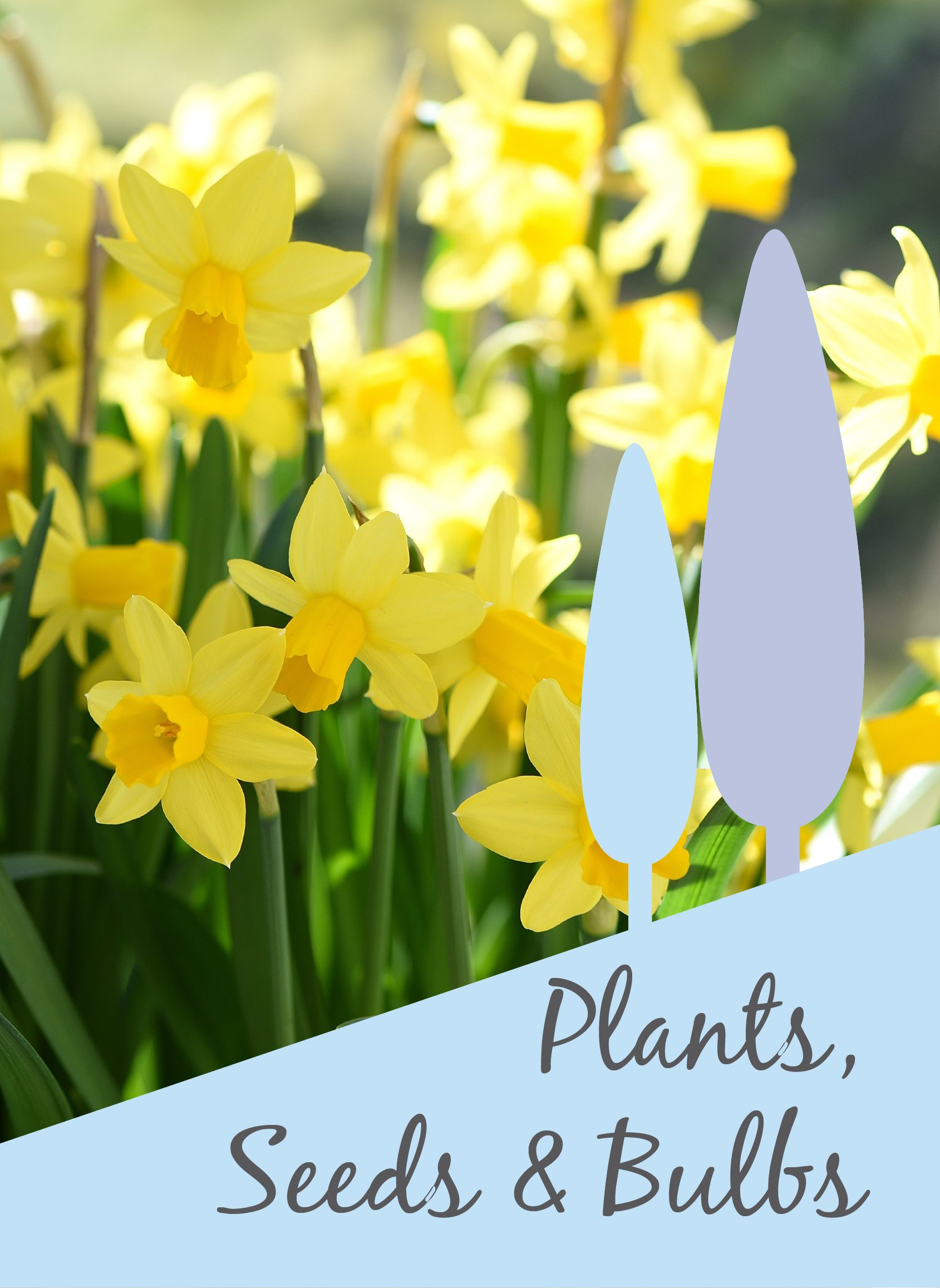 Link to our plants seeds bulbs page
